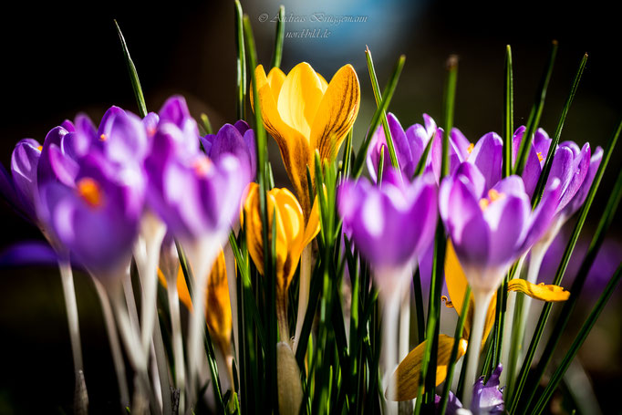 colorful spring-1