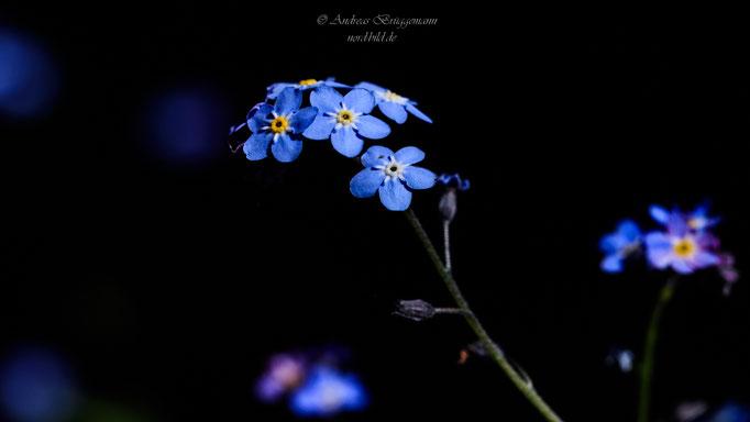 blue spring-19