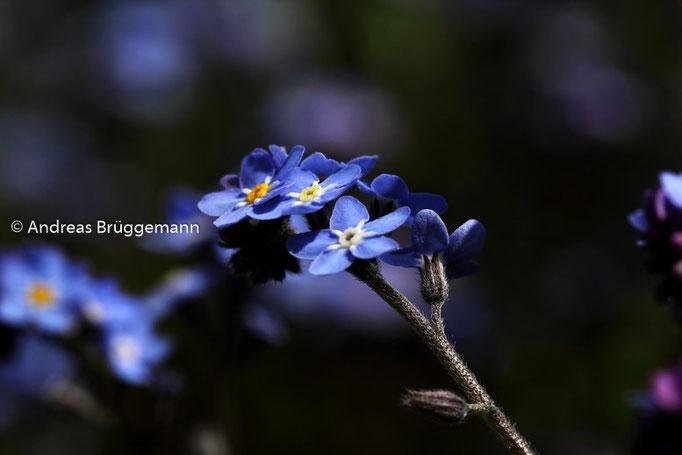 blue in portrait
