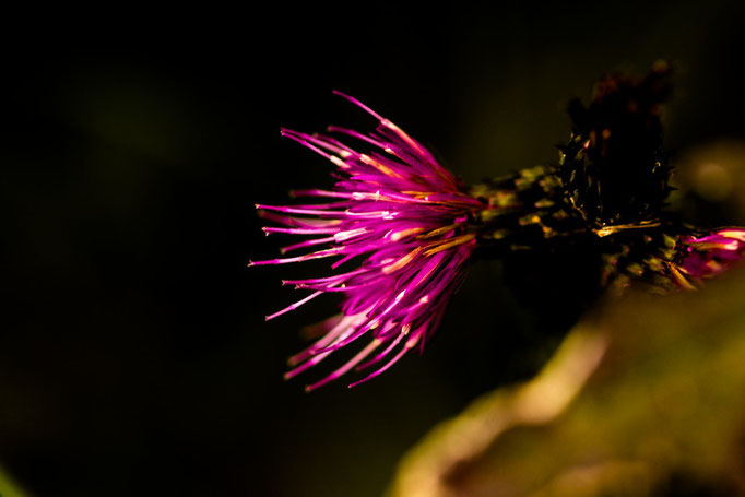 pink in the dark_2