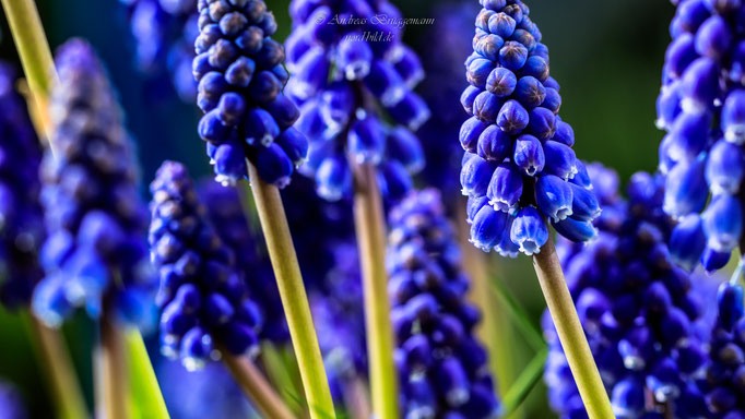 blue spring-8