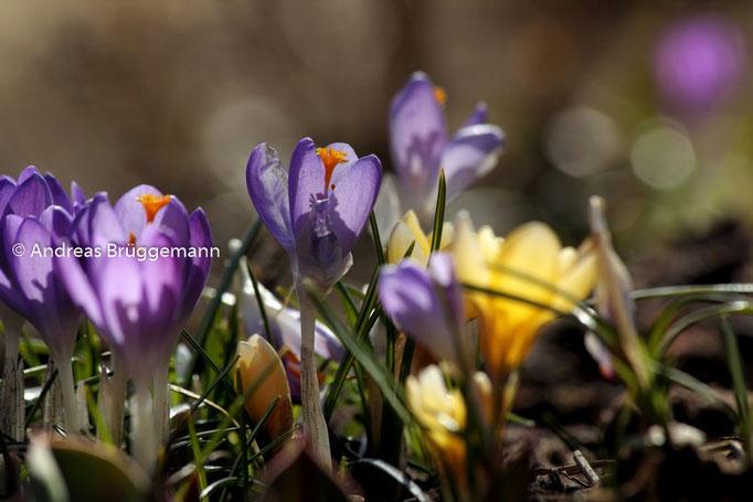 Der Frühling_4