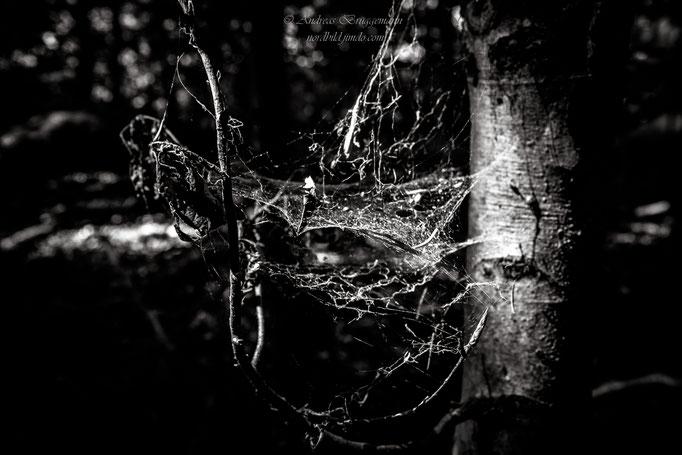 Waldspinnenarbeit