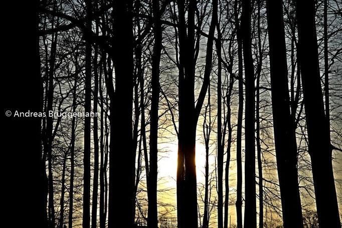 lights between the trees_2