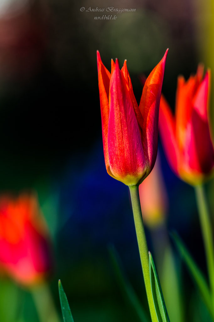 colorful spring-18