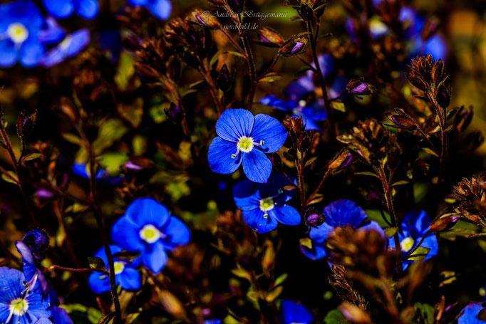 blue spring-14