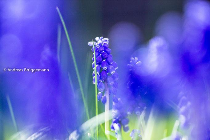 blue again_2