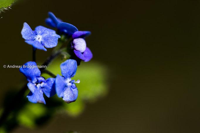 blue again_4