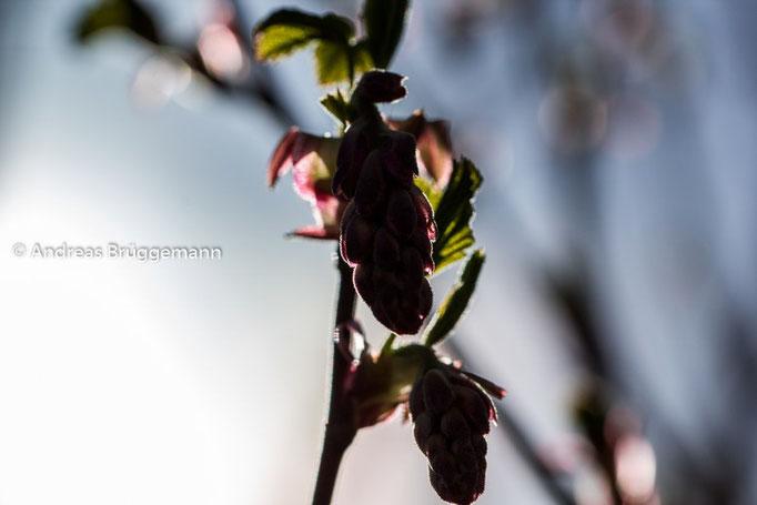 Spring_2016_3