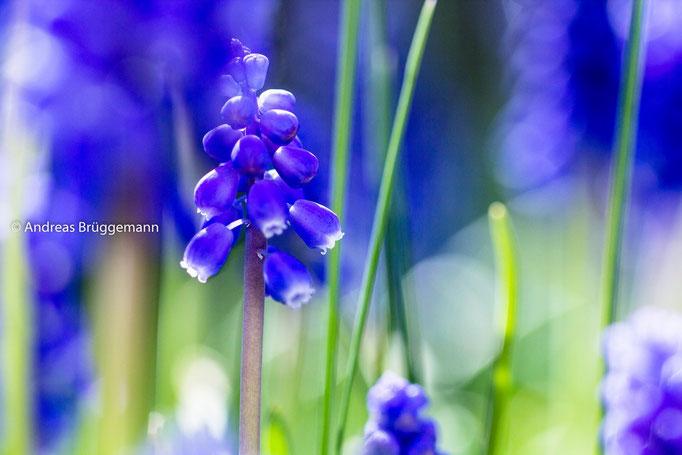 blue again_3