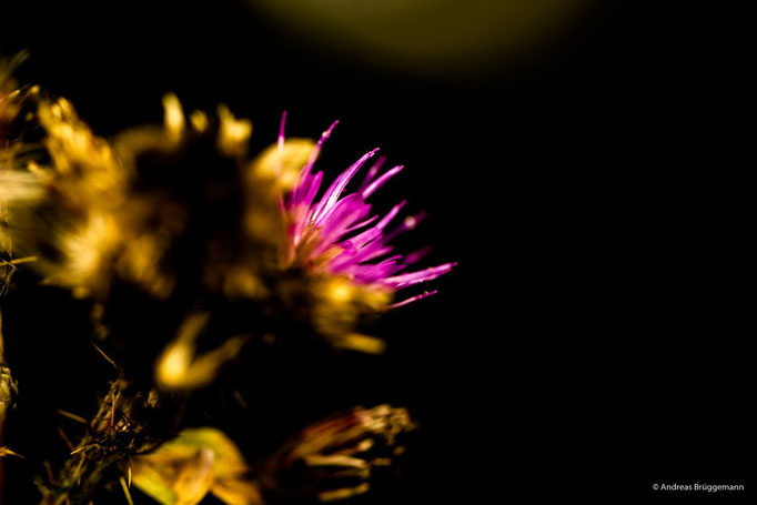 pink in the dark_1