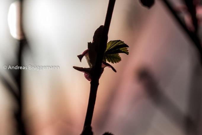 Spring_2016_1
