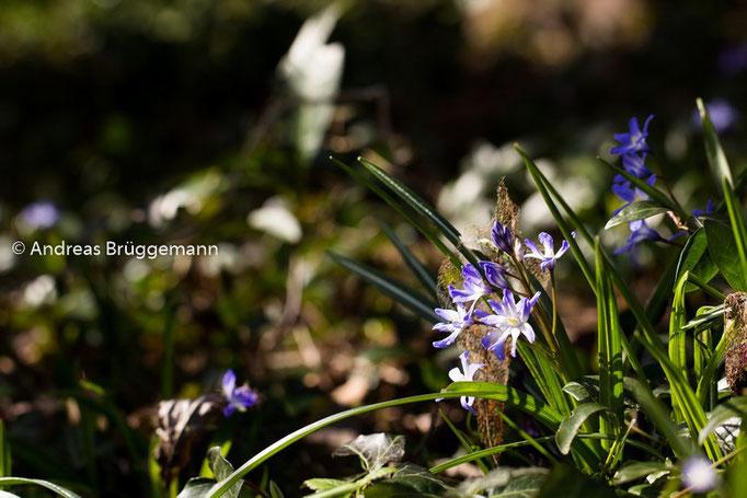Spring_2016_9