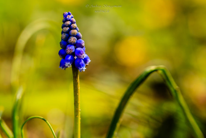 blue spring-18