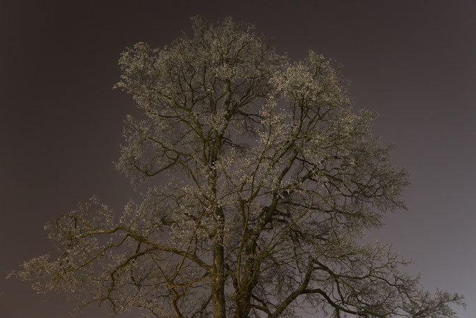 BAUM vor nebliger Kulisse am Rheinfall, Schweiz, Winter 2015 (MP0348) © Michael Pfenning