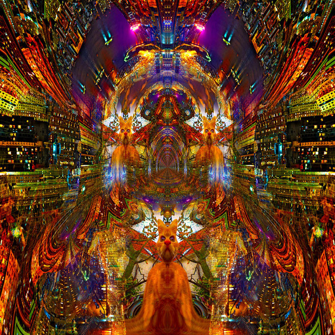 Three cats © kaleidoscope king