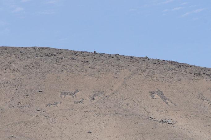 On voit aussi des géoglyphes sur les dunes