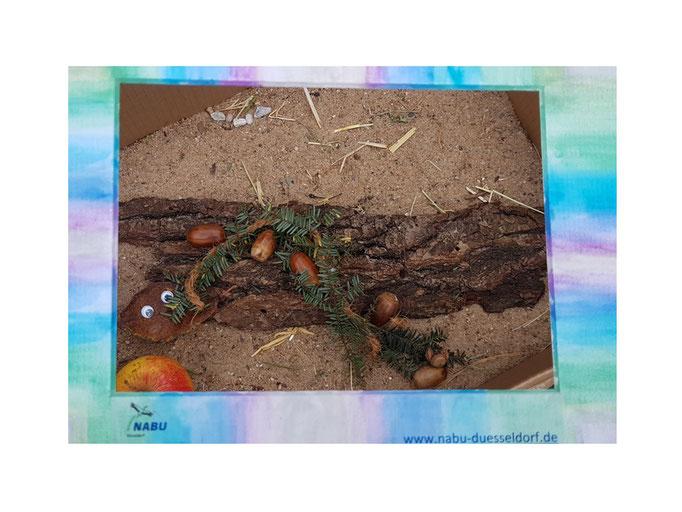 Sparriger Holzeichelwurm von Anette