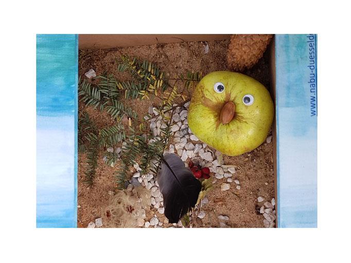 Apfelglupschaugiger Nasenbär von Lotta