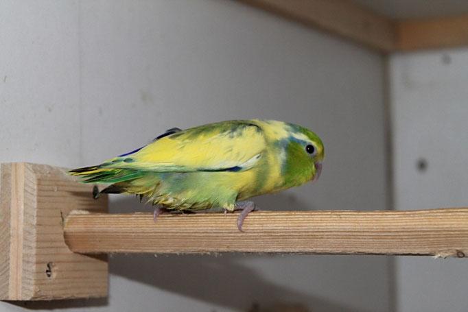 Grünschecke