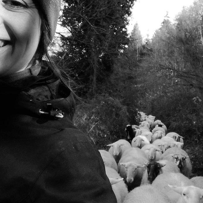 Le 1 janvier 2019, petite balade avec le troupeau !