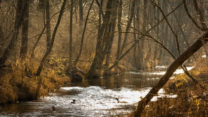Impressionen aus dem Auwald
