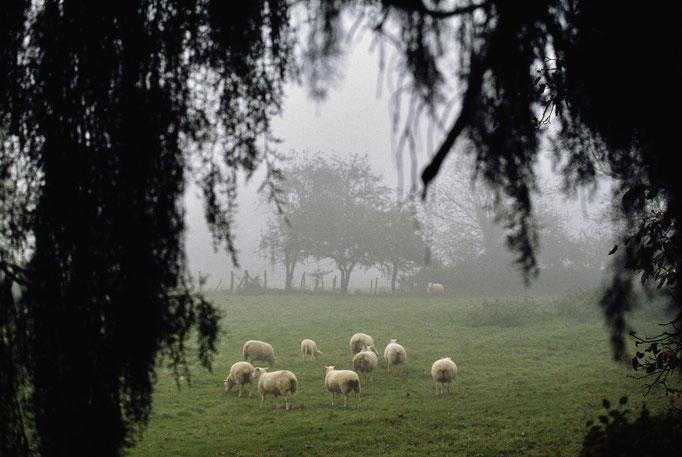 Maison de George Sand, moutons du domaine