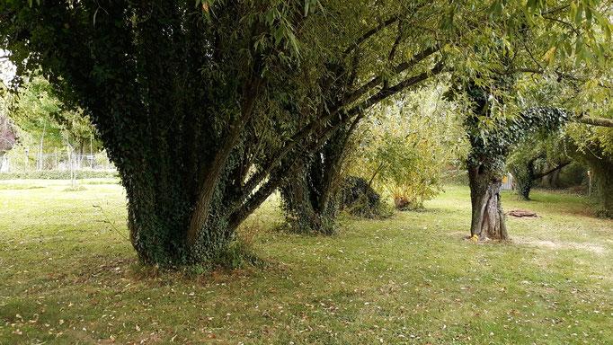 30.08. Unten bei den grossen Weiden herrscht eine ganz spezielle Ruhe