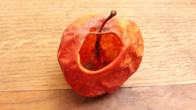 13.09. Die Hornissen haben die Äpfel komplett ausgehölt
