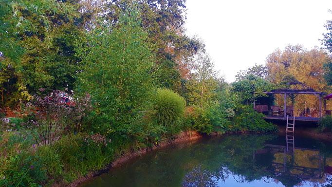 28.08. Die Pflanzen um den Teich herum gelangen mit ihren Wurzeln bis zum Wasser hinunter
