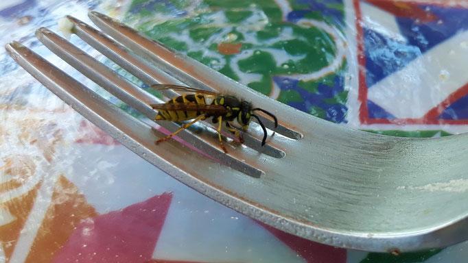 12.08. Die Wespen in diesem Jahr! Viermal wurde ich gestochen!