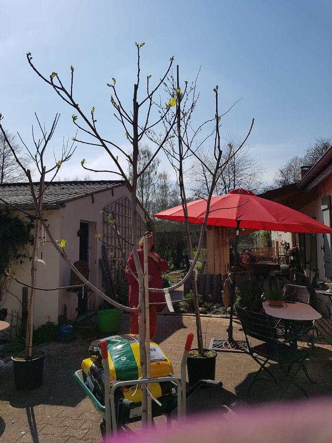 Die Bäume wurden geliefert - trotz Ausgangssperre