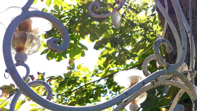 02.08. Blick in die Krone und zum Lüster in der Kastanie