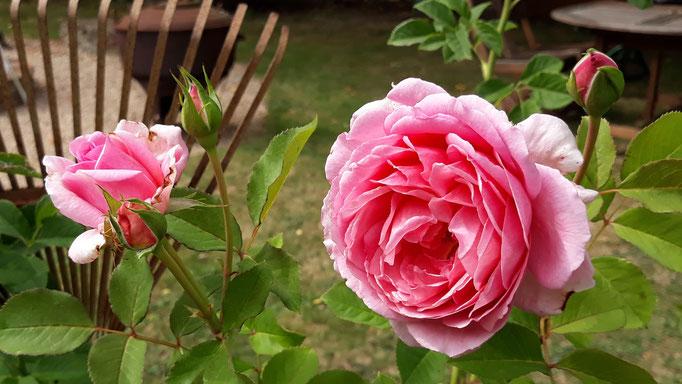 30.08. Stillleben mit Rose und Rechen