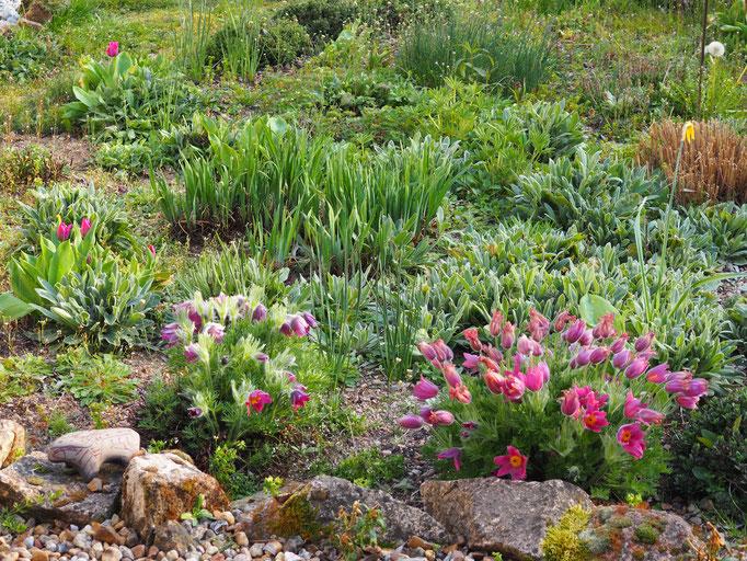 Der Blick über den Steingarten von der Terrasse aus