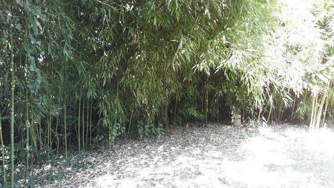 23.08. Der Bambus wächst sich gut ein und macht lauschige Ecken