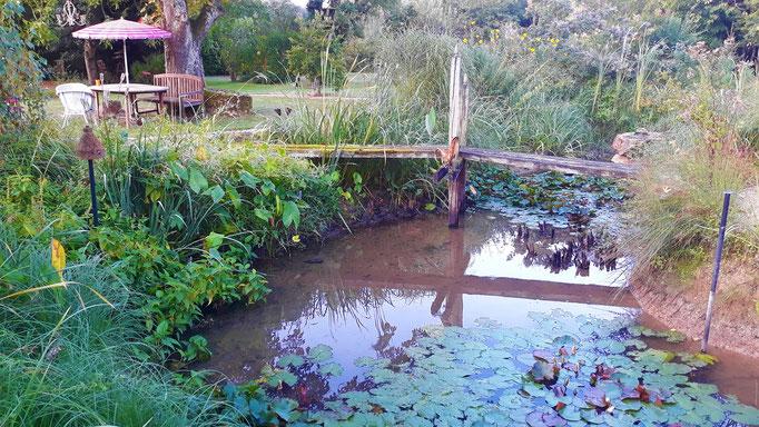 28.08. Absoluter Tiefststand im Teich - und kein Regen in Sicht