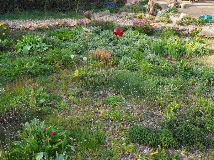 Der Steingarten von der Wiese aus gesehen