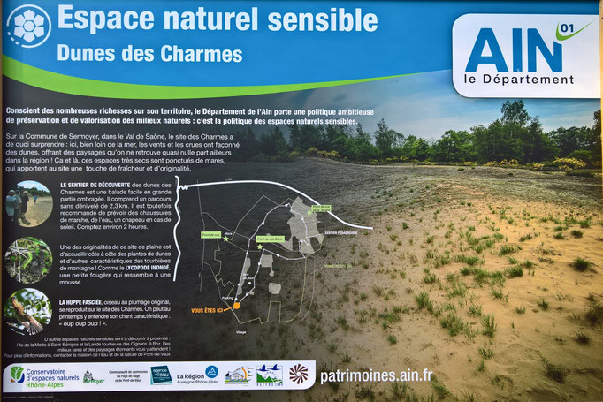 Durch Dünen-Landschaft führen schöne kleine Wege und Pfade