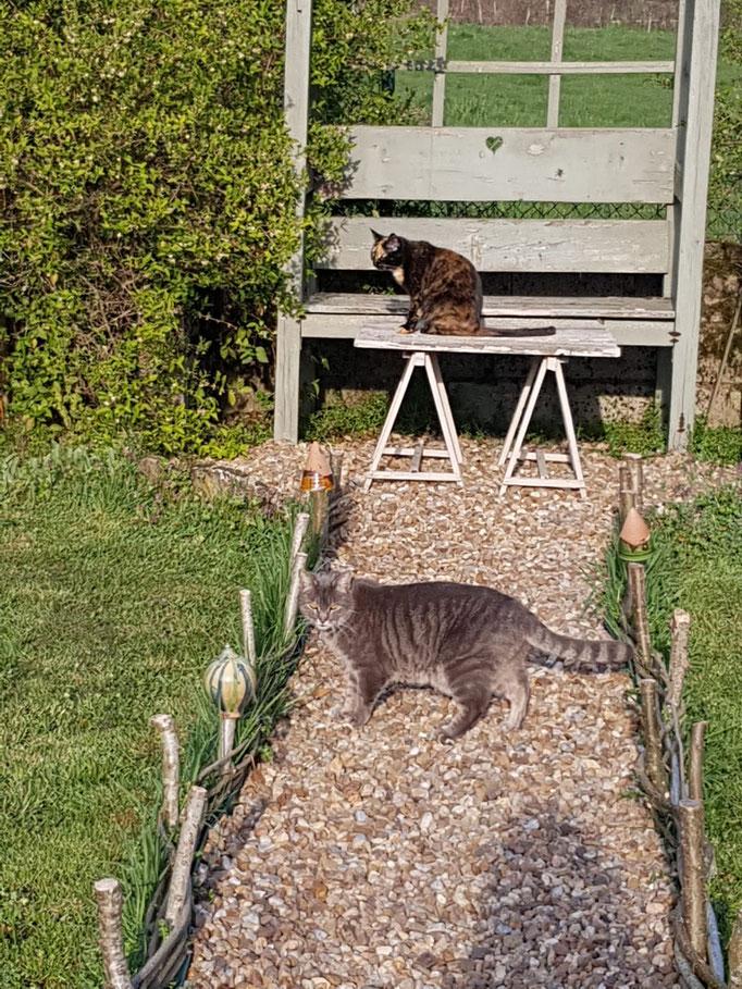 Die Katzis - immer mit dabei, wenn wir im Garten sind
