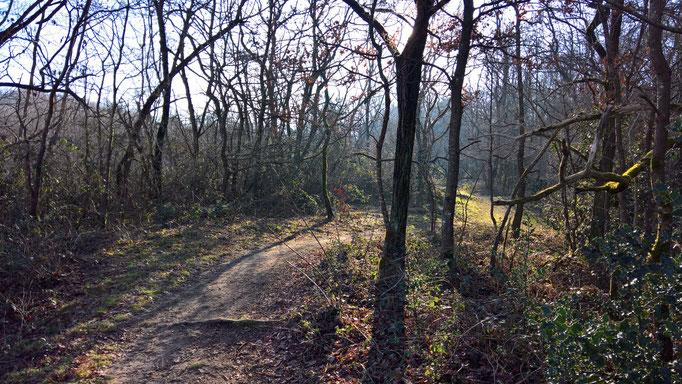 Auch durch lichten Wald führen Wege
