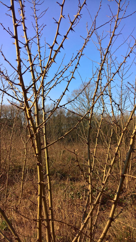 Der Jungwald strotzt von dornigen Akazien