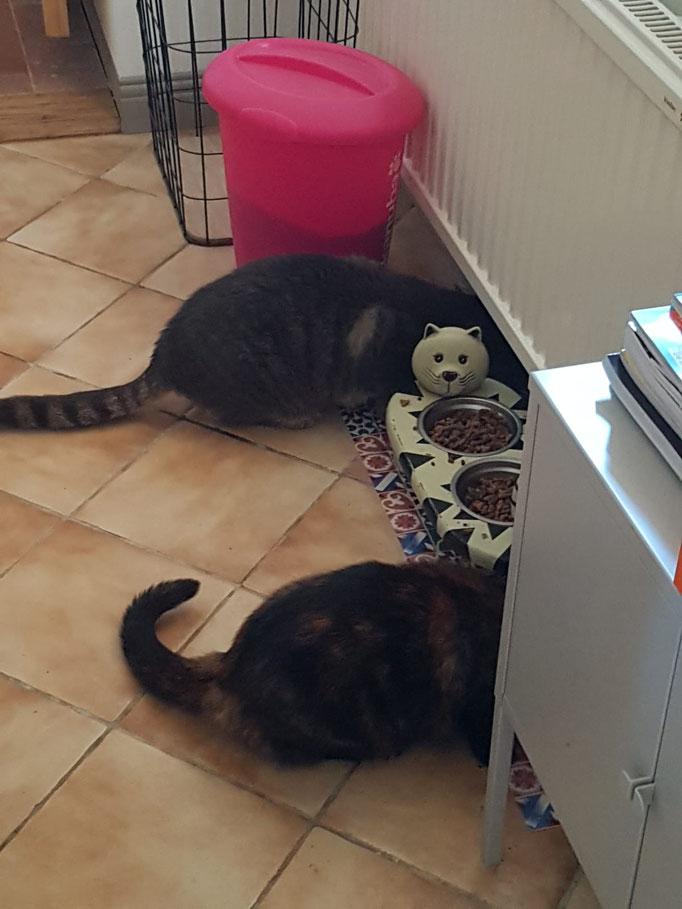 Die Katzen beim Fressen... nicht beim Durch-die-Wand-gehen
