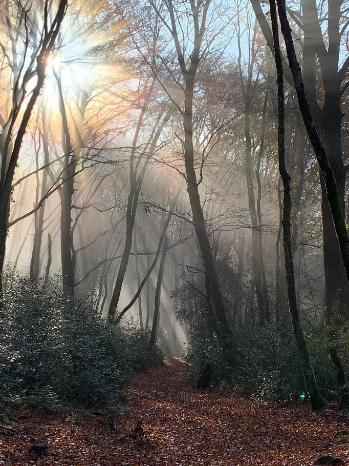 Stefanis Ausflug in den Wald bei Bibracte