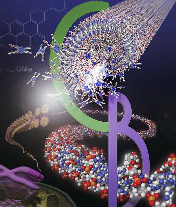 有機化学と生命工学の融合