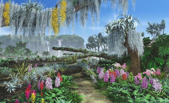 エアプランツの景観