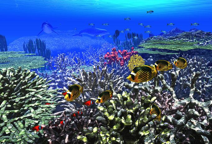 サンゴの海底