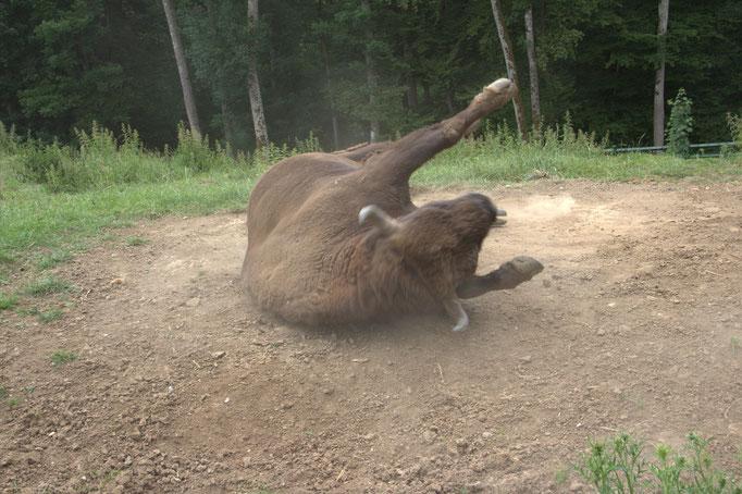 Wanderung in den Wildpark Hundshaupten
