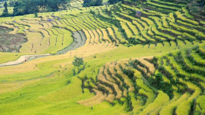 Nepal, Reisterrassen am Weg nach Gongar