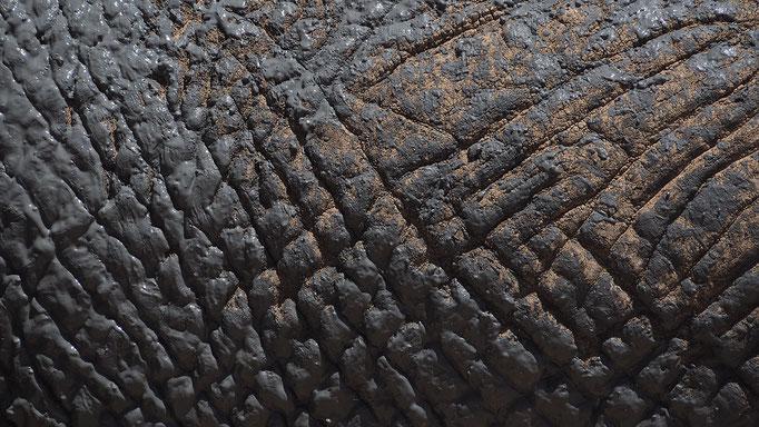 Namibia, Afrikanischer Elefant